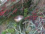 Tibetan Bowl and tree